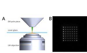 Um die Korrelation zwischen der Fluoreszenz Mikroskopie und dem REM zu gewährleisten werden 49 Punkte auf die Probenoberfläche projiziert.
